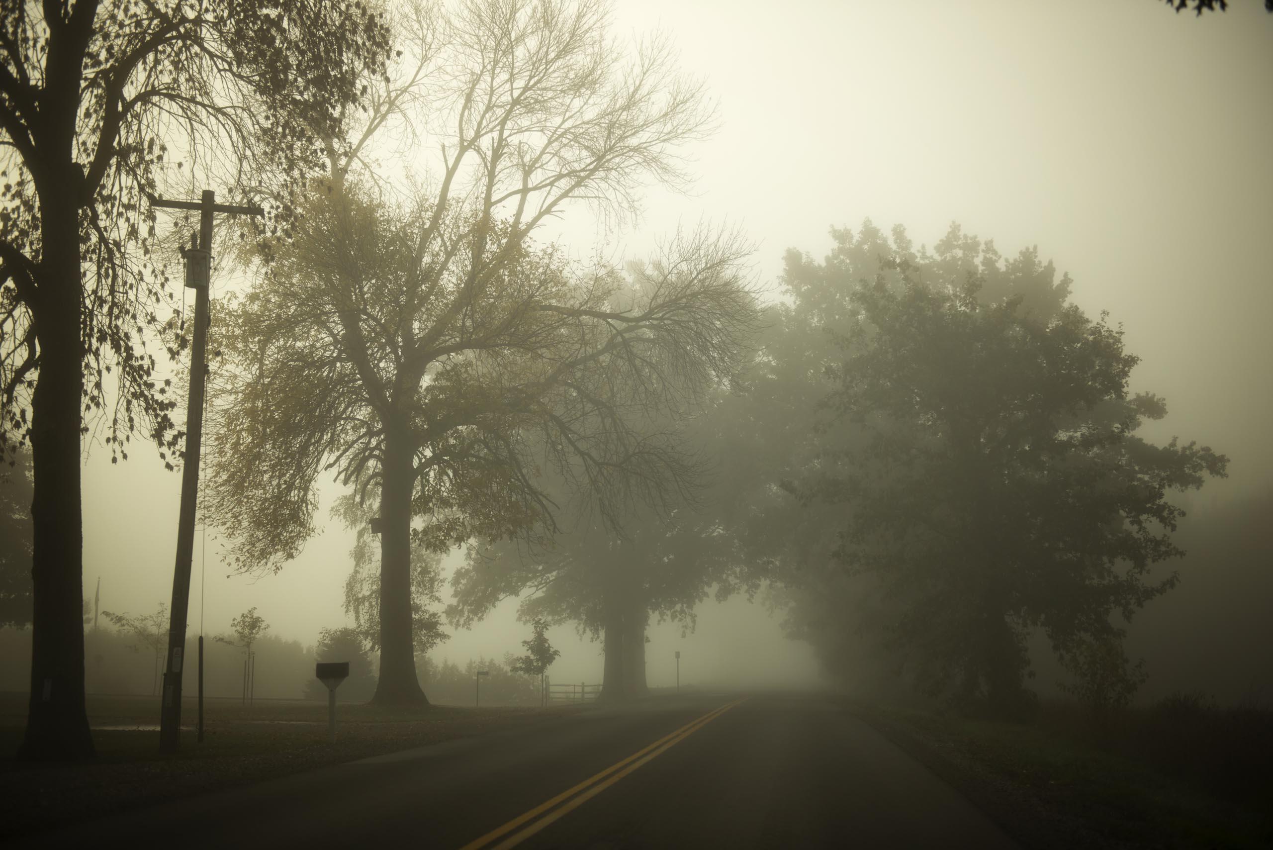 Morning Fog Tree's